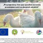 Fundacja Hodowców Polskiej Białej Gęsi zaprasza na szkolenia pn. Przyzagrodowy chów gęsi sposobem na rozwój przedsiębiorczości na obszarach wiejskich - LGD Czarnoziem na Soli