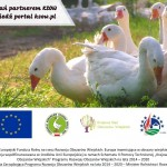Przyzagrodowy chów gęsi sposobem na rozwój przedsiębiorczości na obszarach wiejskich - LGD Czarnoziem na Soli